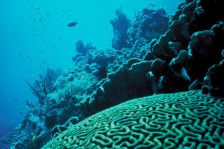 Korallenriffe sind Lebensräume im Meer, in denen über Jahrmillionen Kalkstein gebildet wird. Foto: Wikimedia Commons / Jerry Reid, U.S. Fish and Wildlife Service