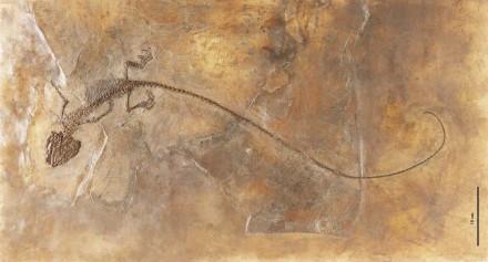 Die Großkopfechse Ornatocephalus metzleri, die 2012 in der Grube Messel gefunden wurde. Foto: Wolfgang Fuhrmannek, Hessisches Landesmuseum Darmstadt