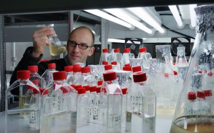 Der Chemiker Prof. Dr. Georg Pohnert von der Uni Jena und sein Team haben Kieselalgen dabei beobachtet, wie sie Silikate im Wasser aufspüren. Foto: Jan-Peter Kasper/FSU