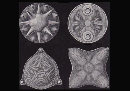 """Kieselalgen, obwohl nur Bruchteile von Millimetern groß, haben faszinierend detailierte Formen. Die Zeichnungen haben wir dem Buch """"Kunstformen der Natur"""" von Ernst Haeckel (1862) entnommen."""