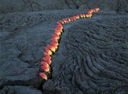 "Nils-Udo, Untitled, crack in lava, ""laternes"" flowers, 96 x 124 cm, La Réunion, 1998."
