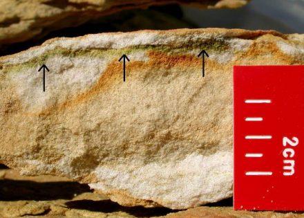 In den obersten Millimetern von Gesteinen lebt die Blaugrüne Felskugel (siehe Pfeile). Es handelt sich hier um einen Sandstein aus der Beacon-Felsformation in der Antarktis. Foto: Burkhard Büdel, TU Kaiserslautern