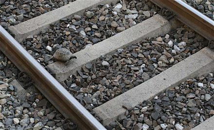 Ob diese Schildkröte sich das Gleisbett ausgesucht hat, um den Schotter gesteinskundlich zu bestimmen, ist nicht bekannt. Foto aus der U-Bahn in Izmir.
