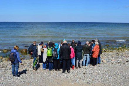 Exkursion zu den uralten Steinen, die am Ufer der Kliffs von Neuem zu sehen sind.