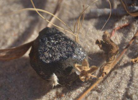 Fragment of the Botswana fireball. Photo: Peter Jenniskens