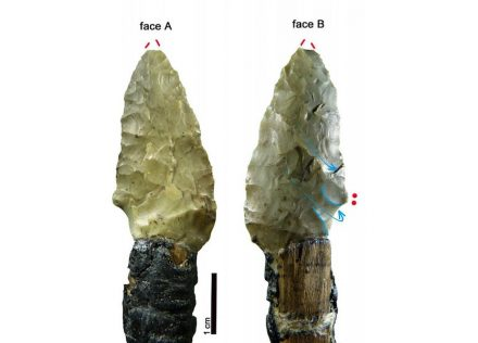 One of the Iceman's arrowheads. Blue arrow = plunged scar; red dots = location of use-wear. Source: Wierer et al (2018)
