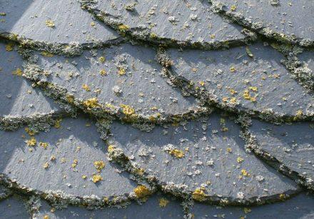 Flechten sind Spezialisten für die Besiedelung extremer Standorte, zum Beispiel von Schieferplatten.