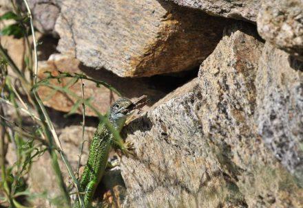 Trockenmauern bieten Tieren und Pflanzen Lebensräume. Foto: FFPPS