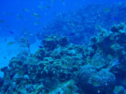 Die Skelette von Korallenriffen bestehen aus dem Kalkmineral Aragonit - eigentlich aber würde man unter den Bedingungen dort Calcit erwarten. Foto: Andy Blackledge  / Wikimedia Commons