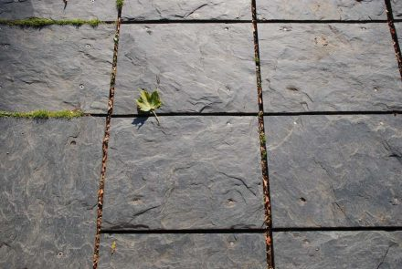 SLATE FROM HERBEUMONT (schiste d'Herbeumont).