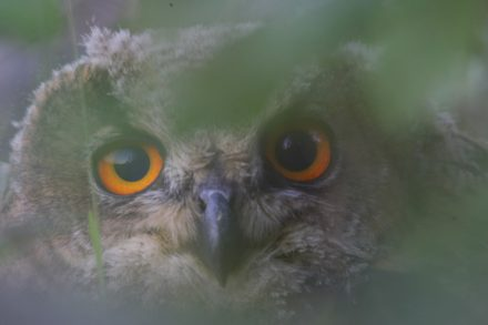 One of the owls at H. Oetelshofen Company.