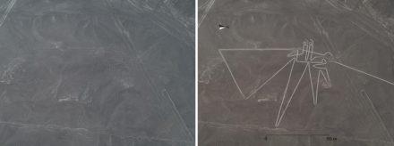Vogel, als Linie. Rechts: Bild nach Bearbeitung.