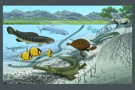 """""""Inselgigantismus"""" vor 50 bis 100 Millionen Jahren in der heutigen Sahara."""
