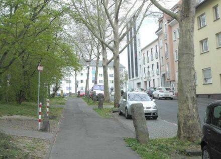 """Die Adolfstraße in Kassel, die 1984 mit Platanen und Basaltsäulen verschönert wurde. Foto: Baumpapper / <a href=""""https://commons.wikimedia.org/""""target=""""_blank"""">Wikimedia Commons</a>, <a href="""" https://en.wikipedia.org/wiki/Creative_Commons_license""""target=""""_blank"""">Creative Commons License</a> """""""