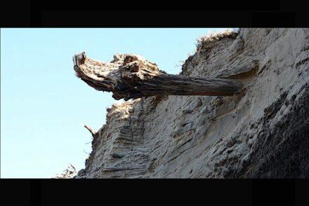 Driftwood in Siberia. Photo: University of Cambridge