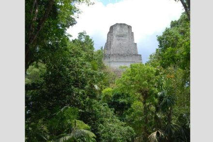 Photo: A temple rises above the rainforest in the ancient Maya city of Tikal. Photo/David Lentz