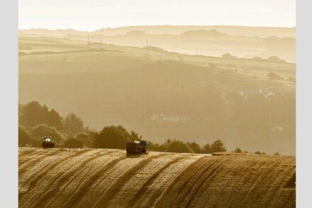 Durch den verstärkten Eintrag von Kohlenstoff in den Boden ließen sich der Klimawandel verlangsamen und gleichzeitig die Ernteerträge steigern, betont das internationale Forscherteam. Quelle: Frank Luerweg / Universität Bonn