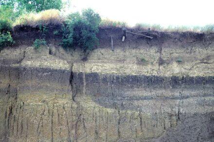 Lösswand mit zwei übereinander liegenden Schwarzerden, Rumänien. Quelle: U. Koch, Geologischer Dienst Nordrhein-Westfalen