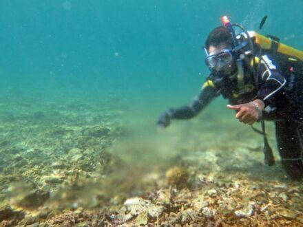 Grundwasserquelle in einem Riff vor Lombok. Foto: Imke Podbielski