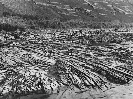 Die Schiefer-Flusssohle der Mosel bei der Ortschaft Ernst vor dem Ausbau mit Staustufen.