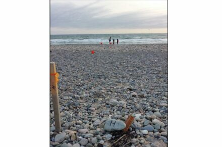 Scientists making a transect of a rocky New England Beach. Image courtesy Jon Woodruff