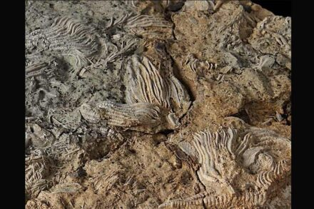 Some of the Jurassic fossils.