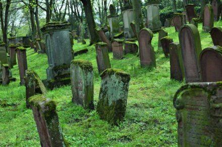 "Old Jewish Cemetery Mainz, ""New Section"" of the Cemetery. Photo: Ernst, Jürgen"